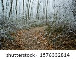 Path Way In Hoar Frost Winter...