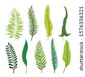 ferns set. botanical detailed... | Shutterstock .eps vector #1576336321