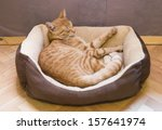 Stock photo sleeping orange cat in cat bed 157641974