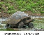 Giant Turtle  Galapagos Island...