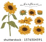 sketch floral botany collection.... | Shutterstock .eps vector #1576504591