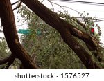 Street Sign and Light through a Downed Tree, St. Louis, Missouri - stock photo