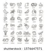 superfoods line vector icons.... | Shutterstock .eps vector #1576647571