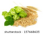 Fresh Green Hops And Barley ...