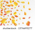 oak  maple  wild ash rowan... | Shutterstock .eps vector #1576695277
