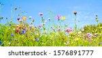 Summer Flower Meadow   Floral...