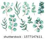 watercolor eucalyptus big set....   Shutterstock . vector #1577147611