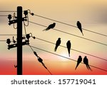 birds migration. the background ... | Shutterstock .eps vector #157719041