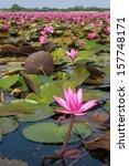 lotus in nature   Shutterstock . vector #157748171