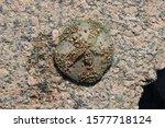 Round Starfish On A Concrete...