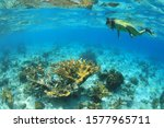 Female snorkeler and Elkhorn coral underwater in the caribbean coral reef