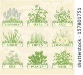 Herbs Lavender Chamomile ...