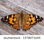 The Painted Lady Butterfly On...