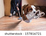 Stock photo very terrible vacuum cleaner focus on dog head 157816721