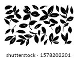 brush leaf vector collection.... | Shutterstock .eps vector #1578202201