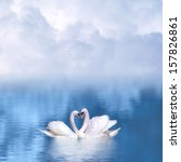 Graceful Swans In Love Against...