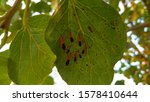 Insects on leaf. insects   bugs ...