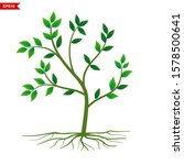 plants with shady green leaves... | Shutterstock .eps vector #1578500641