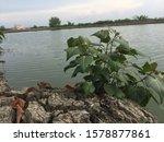 abstract backgrounds textures...   Shutterstock . vector #1578877861