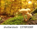Mushrooms On A Stump Covered...
