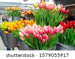 Bunches Of Beautiful Tulip...