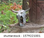 Small photo of Dead animal scull with horns