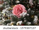 Pink Rose Among Coniferous...