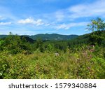 View Of Forest Covered Hill Of...