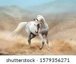 White Arabian Horse Running In...
