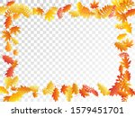 oak  maple  wild ash rowan... | Shutterstock .eps vector #1579451701