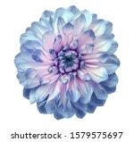 Watercolor Dahlia Flower Blue....