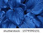 Classic Blue Pantone Color...