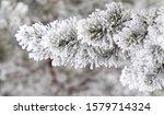 winter forest. coniferous...   Shutterstock . vector #1579714324