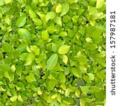 Green Leaf Background. Seamles...
