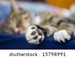 kitten paws   Shutterstock . vector #15798991