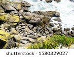 Cape Foulwind New Zealand Fur...