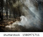 Smouldering Tree Stump After A...