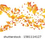 oak  maple  wild ash rowan... | Shutterstock .eps vector #1581114127