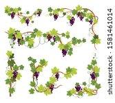 Grape Bunch On Vine  Berries...