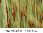 Soft Blurred Background of Grasses - stock photo