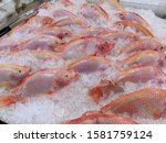 raw red tilapia fish on ice at... | Shutterstock . vector #1581759124