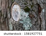Surface Of A Tree Trunk With A...