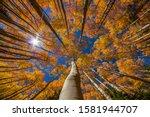 Autumn Foliage In Breckenridge...