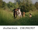 Group Of Happy Dogs Running...