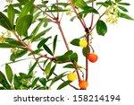 arbutus | Shutterstock . vector #158214194
