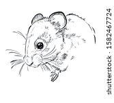 vector sketch illustration of...   Shutterstock .eps vector #1582467724
