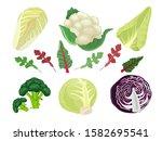 cabbages cartoon. green...   Shutterstock .eps vector #1582695541