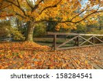 Rural Autumn Park View In...