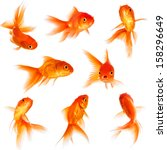 Gold Fish Isolated On A White...