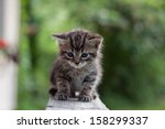 Stock photo small cat kitten 158299337